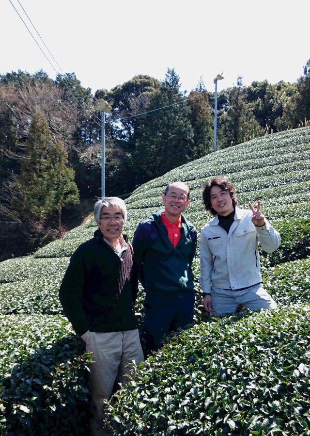 ひより茶畑2